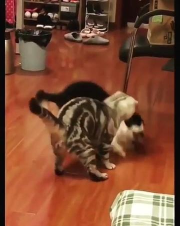 "Please Help 60k | kucing lucu on Instagram: ""Kamu takkan menang melawanku kisanak... .. Hmm, masih mau coba jurusku? Sini maju kau! .. (Kemudian di..."