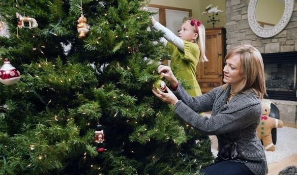 Как сохранить живую елку в течении новогодних праздников