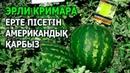 ЭРЛИ КРИМАРА F1 - ЕРТЕ ПІСЕТІН АМЕРИКАНДЫҚ ҚАРБЫЗ (14-06-2019)