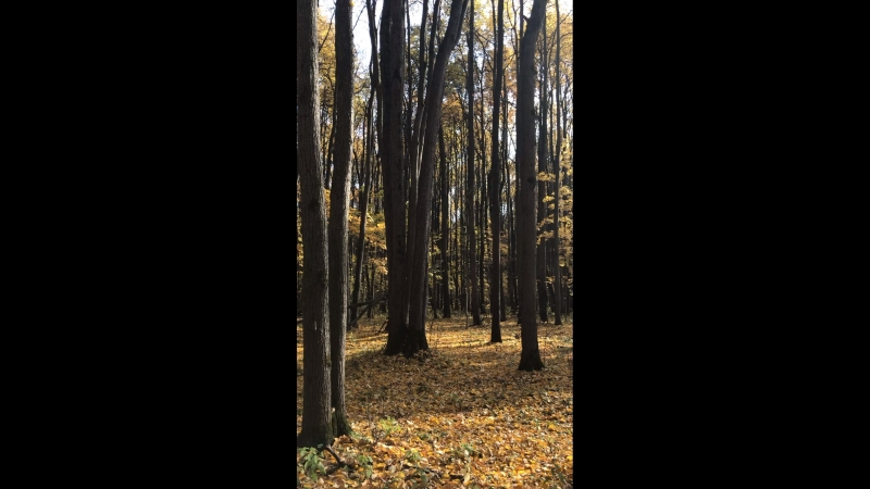 Тихо падают листья