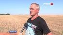 Какие итоги подводят Крымские аграрии по сбору урожая зерновых культур