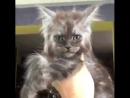 кот с человеческим лицом-9
