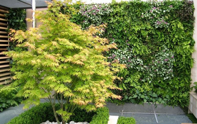 Озеленение интерьеров- вертикальный сад, вертикальное озеленение, фитостена