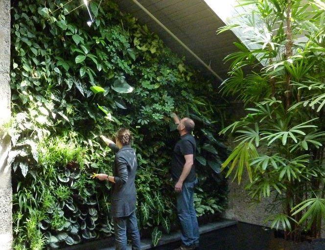 Уход за вертикальным садом, фитостеной, уход за растениями при вертикальном озеленении