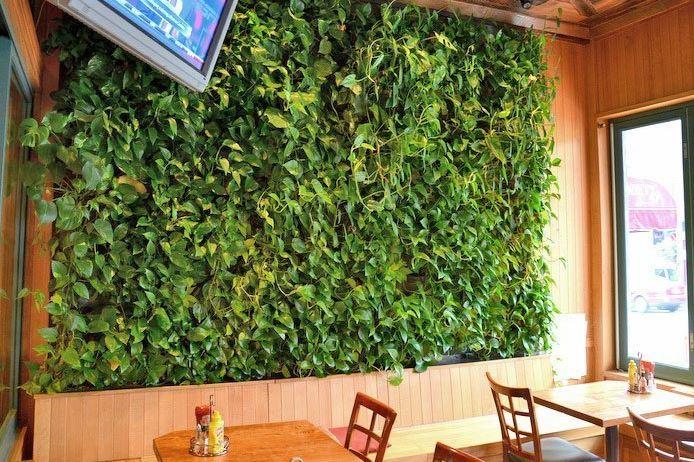 Вертикальное озеленение кафе в СПб