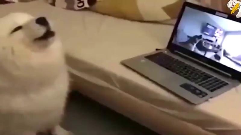 Собаки воют