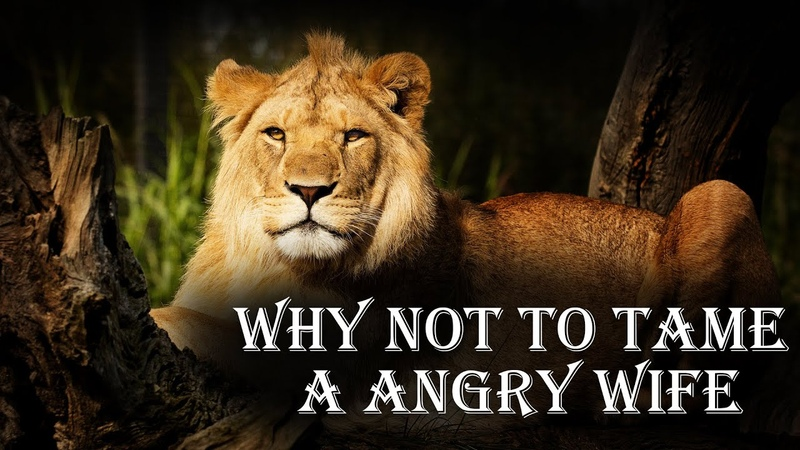 Angry Lioness Reasons why you should never tame your wife