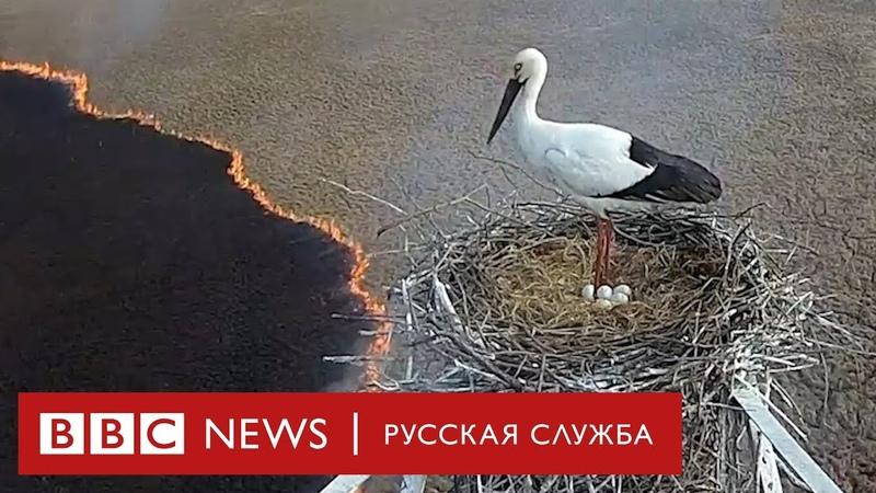 Аисты и страсти как защитники животных спасают птиц от пожаров