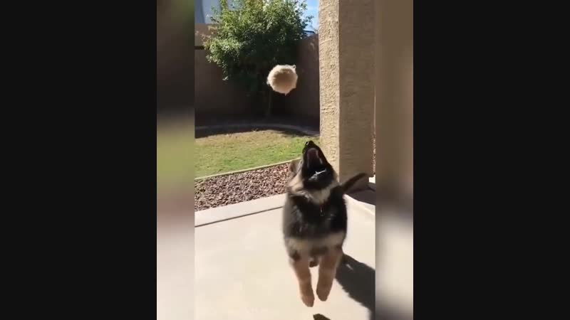 Doggos попуги
