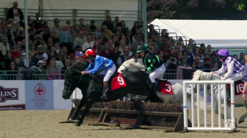 FL ● Мини-док. фильм о мини-скакунах и их жокеях (барьерная скачка Shetland Pony Grand National)● 1080HD