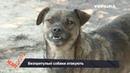Безпритульні собаки атакують перехожих Випуск 25 Контролер
