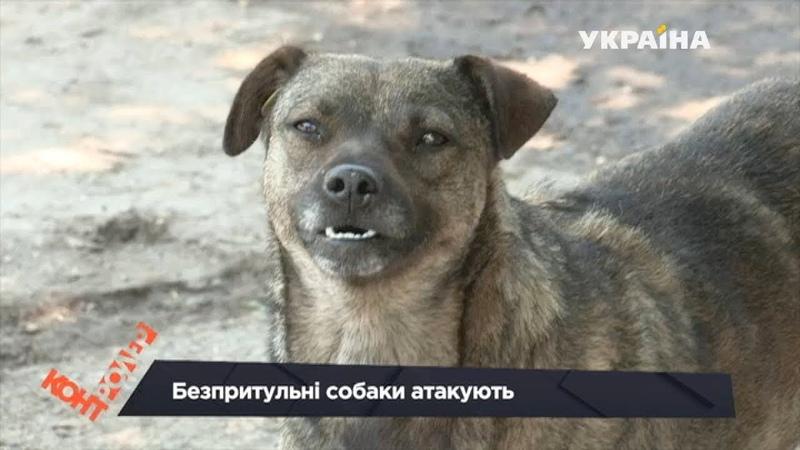 Безпритульні собаки атакують перехожих (Випуск 25)   Контролер