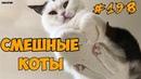 Самые Смешные Коты в Мире Приколы с Котами Вы будете смеяться До Слез