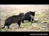 МОИ ЗАБАВНЫЕ ЖИВОТНЫЕ Эти забавные животные