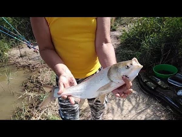 И вновь толстолоб дуреет!... 3 х часовая рыбалка на новом пруду.