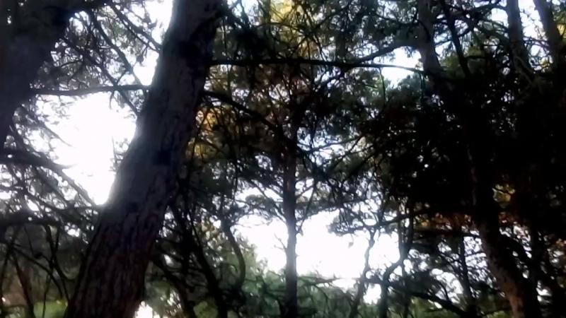 11 школа Встреча с белкой в лесу