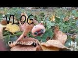 LPS VLOG снимаю клип!Как снять красивые кадры на природе! + ОТВЕЧАЮ НА ВОПРОСЫ