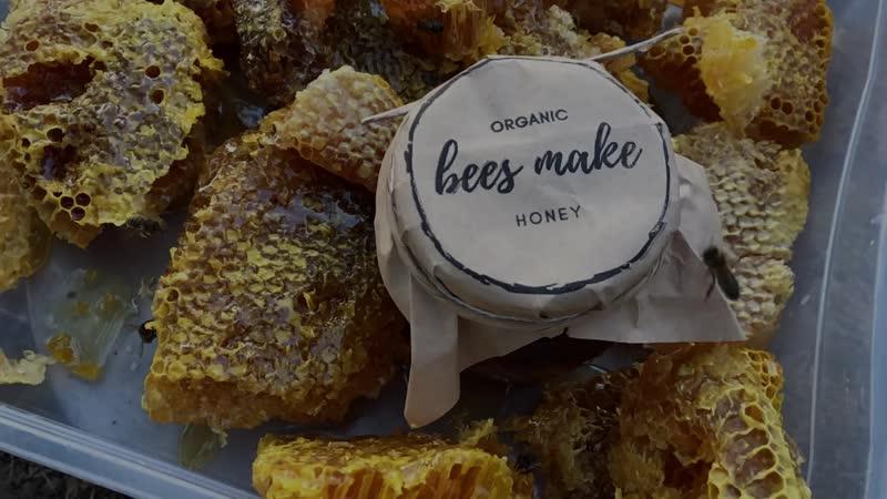 Добыча бортевого дикого меда organic