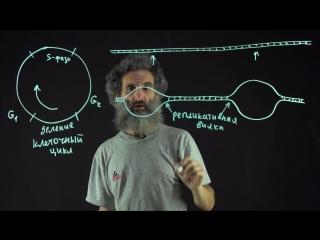 56. Репликация ДНК