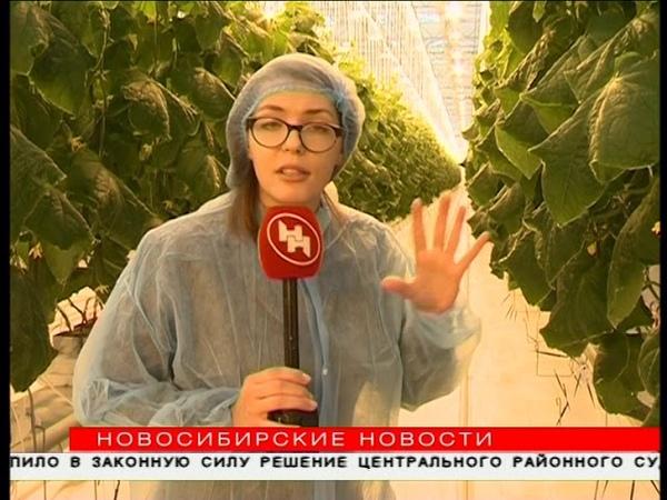 Роботы будут выращивать розы в тепличном комбинате под Новосибирском