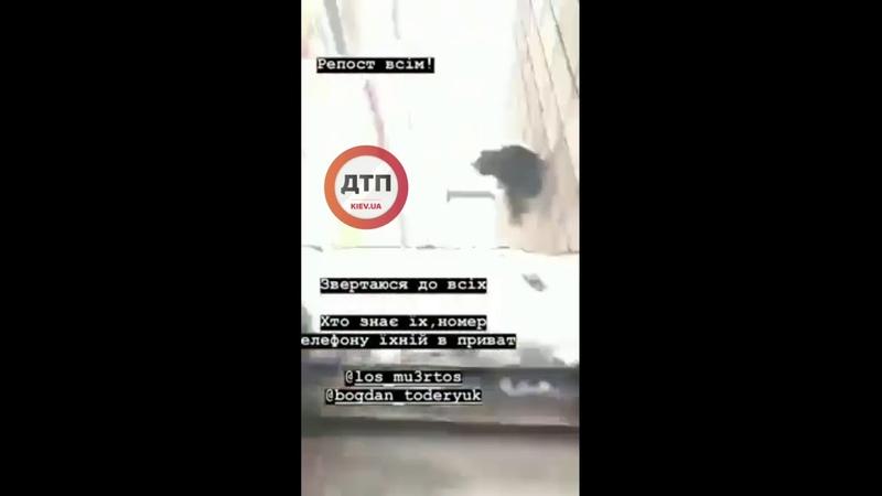 Жуткое видео со Львова: дети выбросили из окна кошку... Надеюсь на радикальное решение проблемы. Реп
