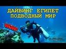 🇪🇬 ЕГИПЕТ КРАСНОЕ МОРЕ ПОДВОДНЫЙ МИР И ДАЙВИНГ 🐠 UNDERWATER WORLD IN RED SEA DIVING EGYPT