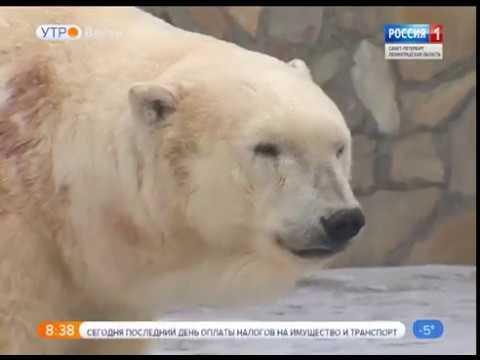 Вести Санкт-Петербург.Утро от 3.12.2018
