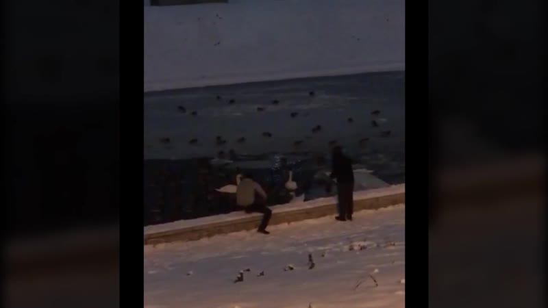 УМВД России по Орловской области: установлен подозреваемый в краже птиц из Детского парка