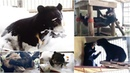 Fun and games helps rescued bear cubs overcome trauma