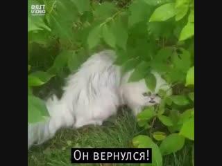Если бы понедельник был котом...Возвращение...