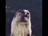 Instagram video by Medynich
