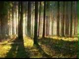 Эдвард Григ. Утро в лесу.