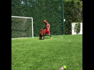 Месси тренируется с собакой