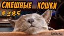 Смешные кошки приколы про кошек с котами 2018 185 Топовая подборка с котами