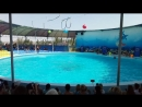 Дельфинарий Азовское Арабатская стрелка