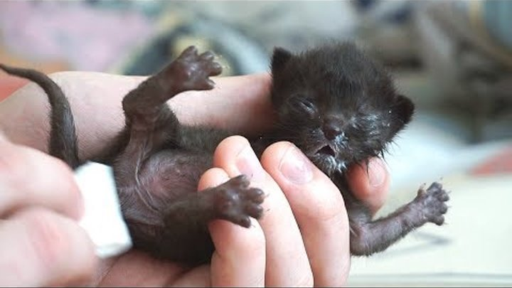 Спасение новорожденного котёнка   Saving the newborn kitten / SANI vlog