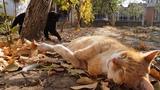 Вставай!!! Кошка будит кошку. Животные