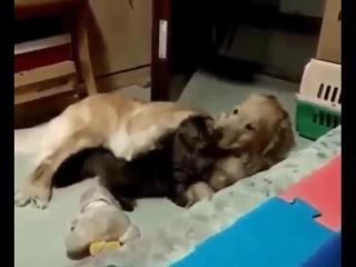Мне просто нужен кто-то, кто будет относиться ко мне так же, как этот милый пёсик относится к котику.
