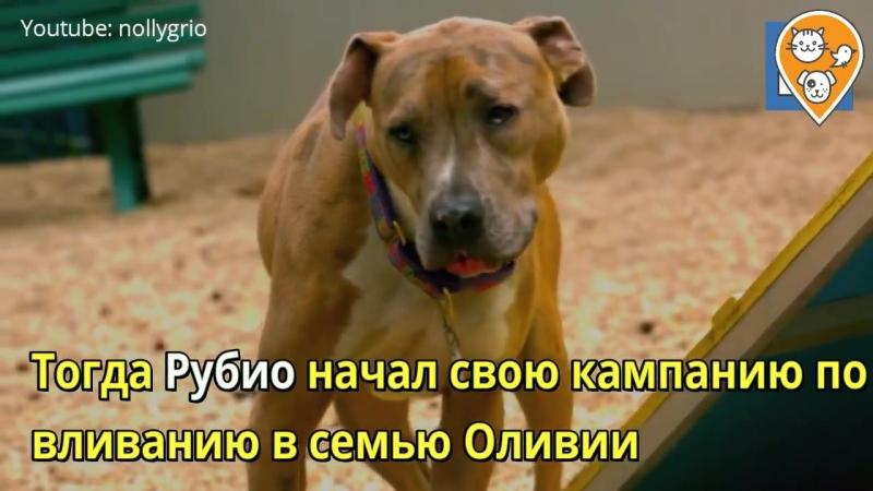 Бездомный пес полгода сторожил стюардессу у отеля, пока она не забрала его домой