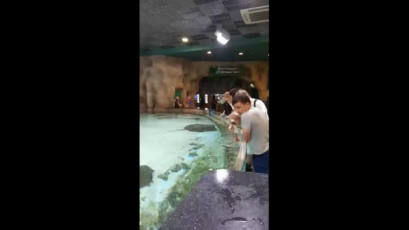 В аквариуме со скатами