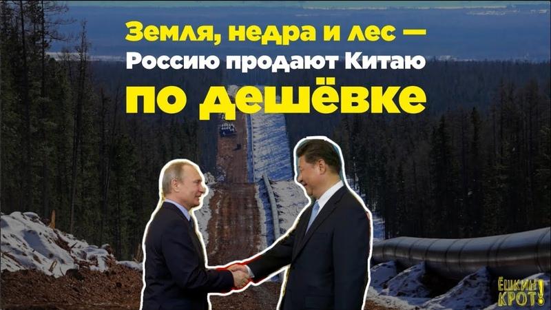 Земля, недра и лес — Россию продают Китаю по дешёвке