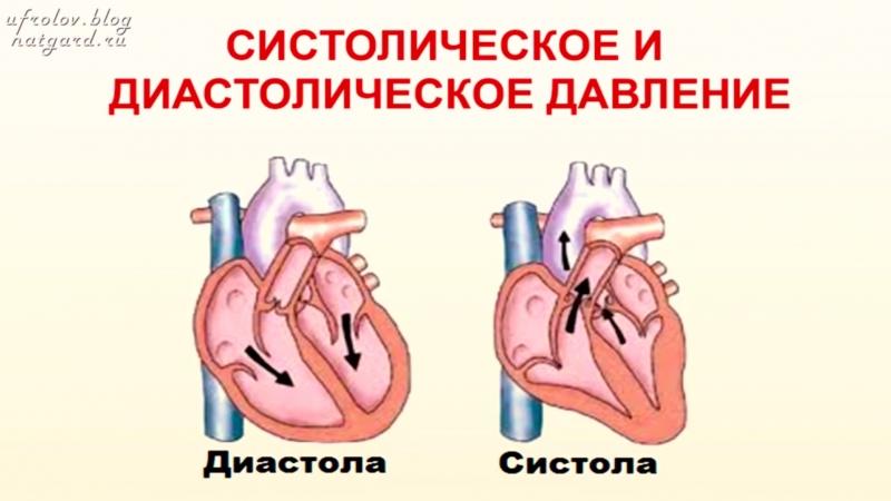 КРОВЬ. Кровеносная и кроветворная системы организма - самое главное кратко! Знай и ЖИВИ!