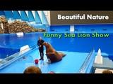 Amazing Smart Funny Sea Lion Show