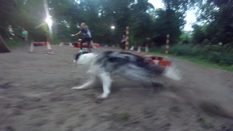 Agility LUCKY DOG