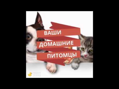 Домашние питомцы Галины кошки Вера Лейла Даша и Тарасик