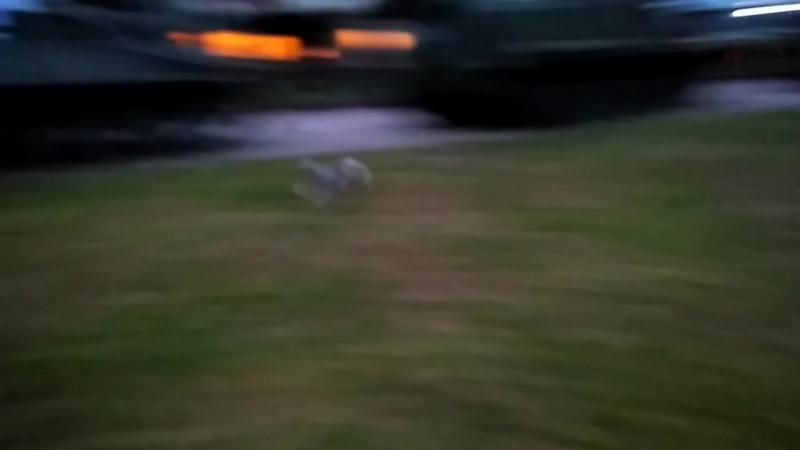 Масина вечерняя беготня!