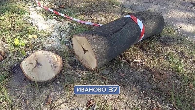 На ул. Громобоя в Иванове спилили аллею