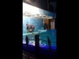 Дельфинарий Лоо
