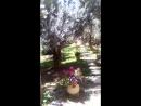 Гефсиманский сад. Иерусалим.