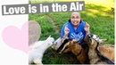Nigerian Dwarf Goats Love is in the Air
